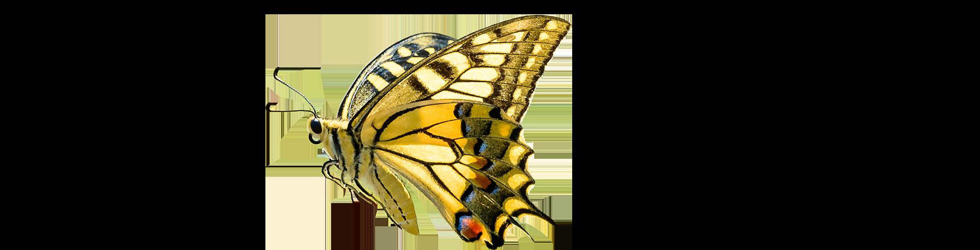 farfalla sogno di samuele